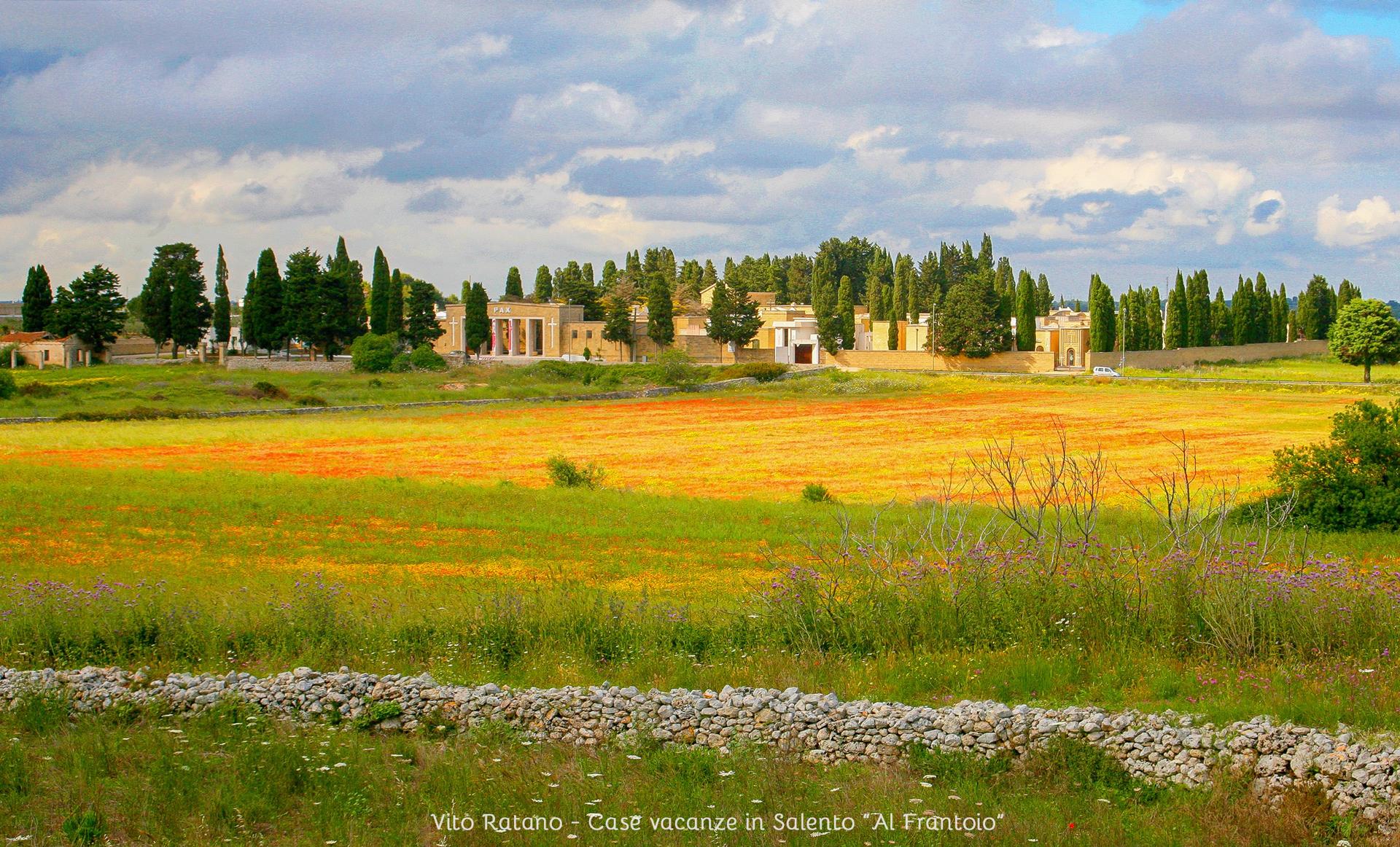 Paesaggi del Salento, campo di papaveri cimitero di Alessano